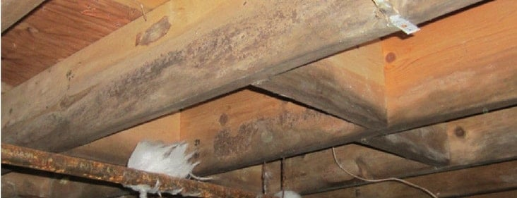 Is Your Crawl Space Damp Here Is What To Do Next New