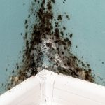 Indoor Air Quality | Chicago, IL