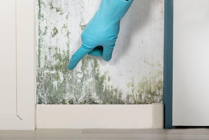 Mold Testing | New Jersey | EZ Breathe Ventilation System